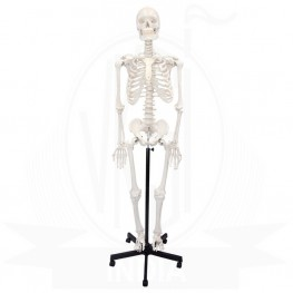 Human Articulated Skeleton Model