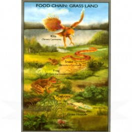 VKSI Food Chain - Grass Land Chart