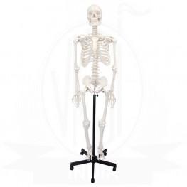 VKSI Skeleton Stand
